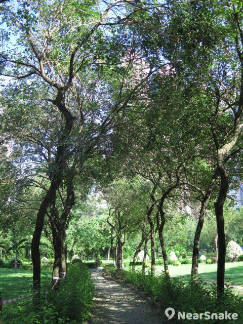筆者到訪南昌公園當日縱無「花海隧道」,但這條「綠樹隧道」同樣叫人暑氣全消。