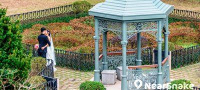 【拍拖賞花好去處】9大香港賞花地點推薦 山頂公園•饒宗頤文化館周末遊