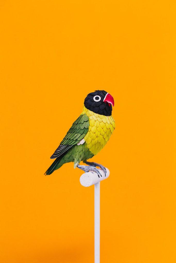 黃領情侶鸚鵡