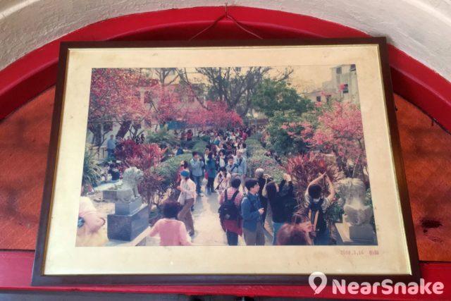 關公忠義亭內掛著一幅攝於 2008 年 3 月 16 日的照片,可見當時亭外櫻花群盛放時的壯麗景觀。