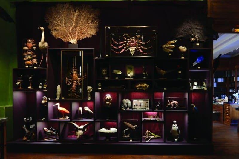 「珍奇櫃」的出現,啟發歐洲學者們開始建立起自然科學的分類體系。