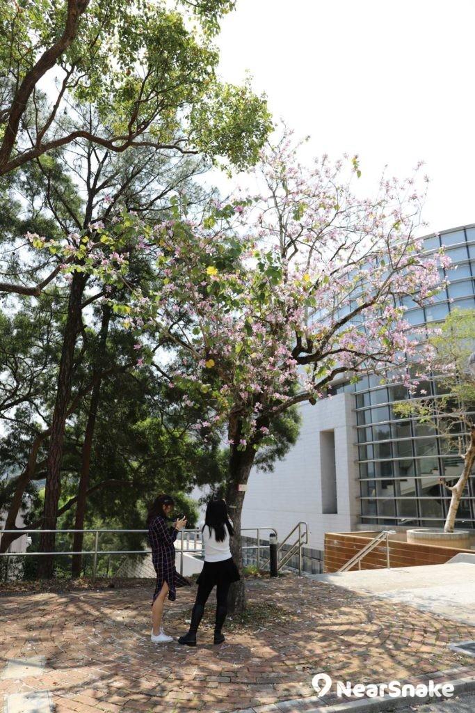 中大校園鳥語花香,學生亦趁春暖花開影相留念。