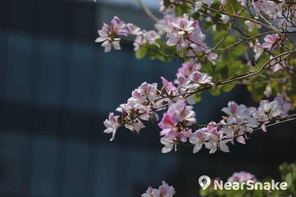 中大校園其他花卉(四)