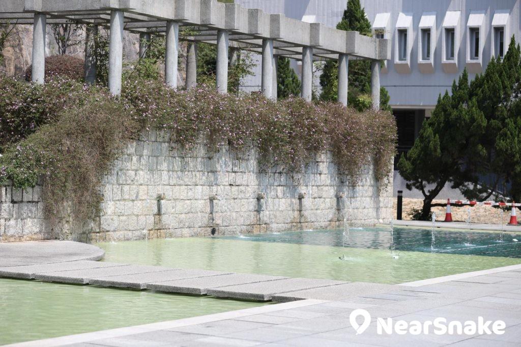 「惠園」圍牆建築上長滿小葉馬纓丹。