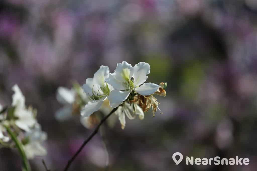 中大校園其他花卉(三)