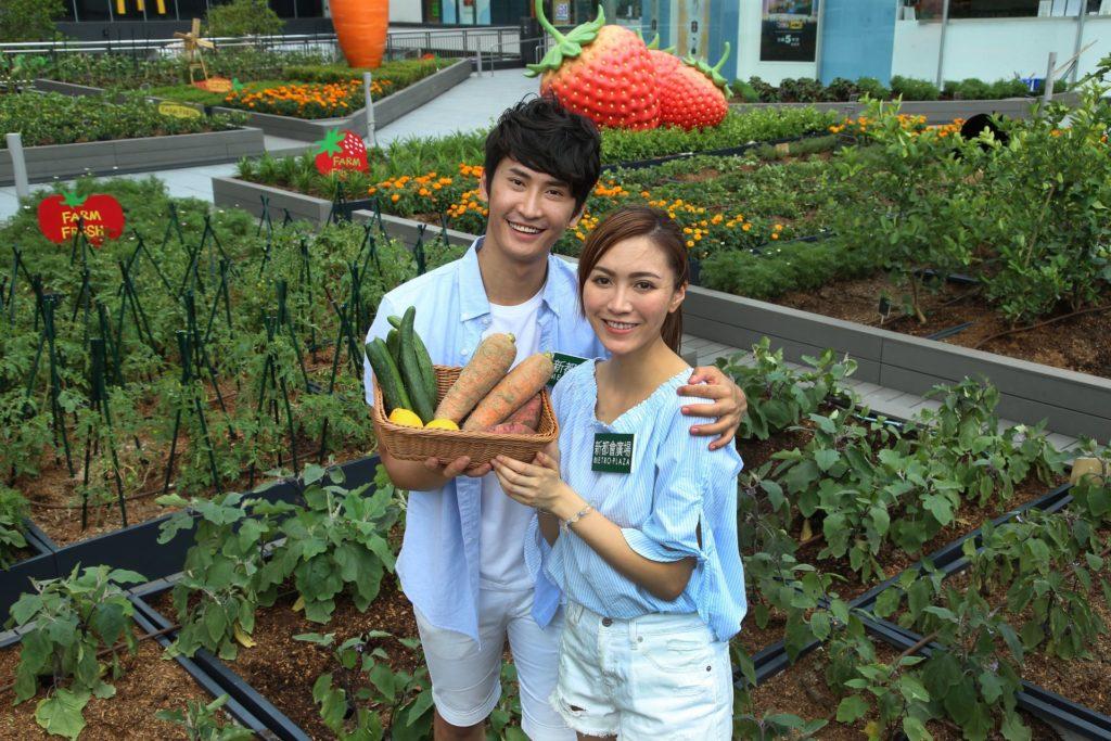 新都會廣場都市農莊亦會舉辦「都市農耕體驗(導賞及工作坊)」,參加者亦可體驗農作物收割。