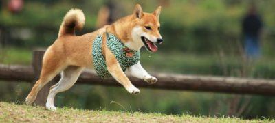 【狗狗好去處】香港 10 大狗公園推介 讓你拍拖兼帶毛孩放電散步!