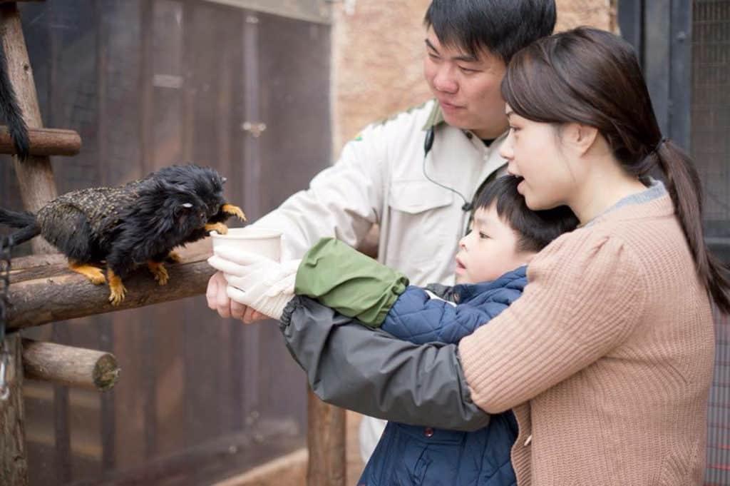 大人細路可以為赤掌獠狨準備營養小吃,更可以近距離餵飼及觀察牠們。