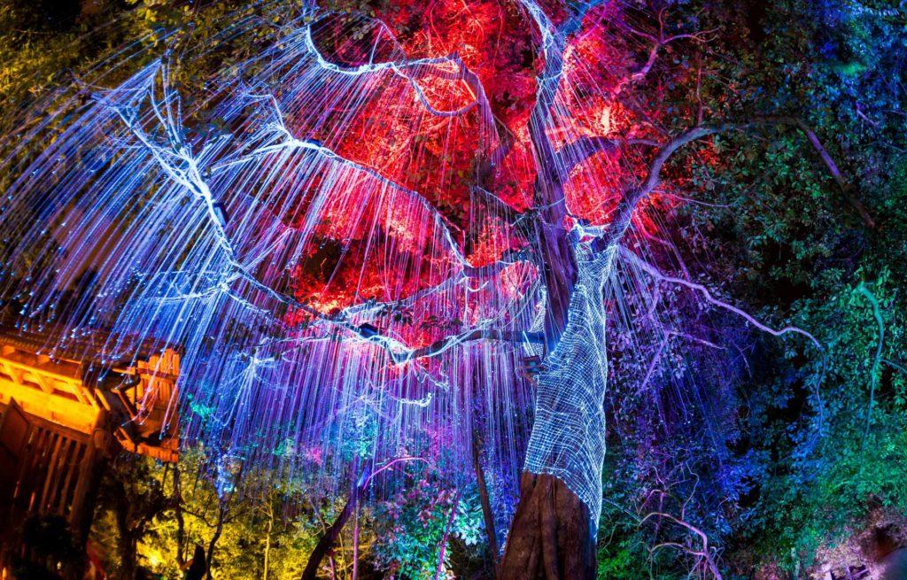 數碼港商場佈置成融合燈光與自然的七彩霓虹燈森林,呈現出一個奇幻世界。