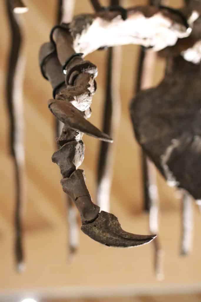 在「MEET THE T. REX 探索暴龍世界」展覽上,大家可看到暴龍擁有銳利的指甲。
