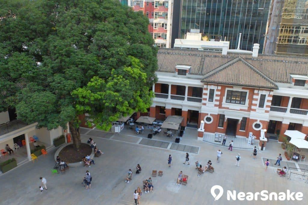 大館檢閱廣場的空間非常廣闊,著名的「升職芒果樹」亦栽種於此。