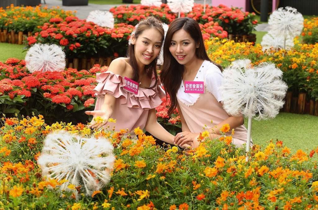 新都會廣場色彩夏日花祭: 一朵朵鮮豔燦爛的菊花一路綿延簇擁盛放,為綠地點綴一朵朵橘紅