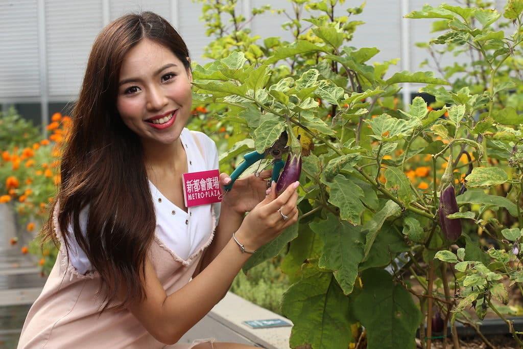 新都會廣場都市農莊現摘新鮮蔬菜、香草和食用花,可帶到商場內的特定餐廳,烹調成有營美食。