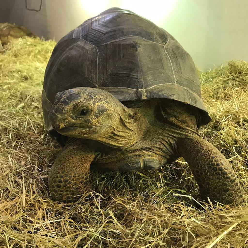 探索大自然遊學園 2018 會場上將有大龜現身。
