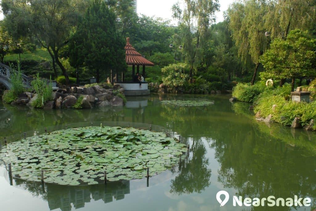 沙田公園北園建有小橋、涼亭、荷花池溏,讓人心情難得平靜。