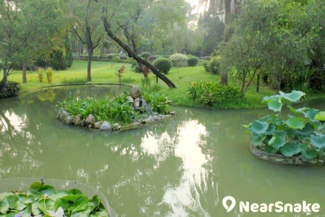 沙田公園南園內的水池花園,池水或許不算清澈,但氣息予人很舒服。