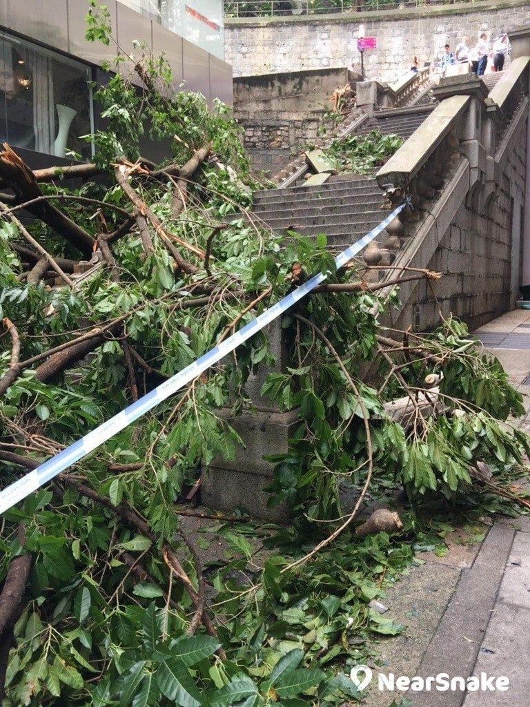 都爹利街的花崗岩石階亦嚴重損毀,昔日浪漫街景已不復見。