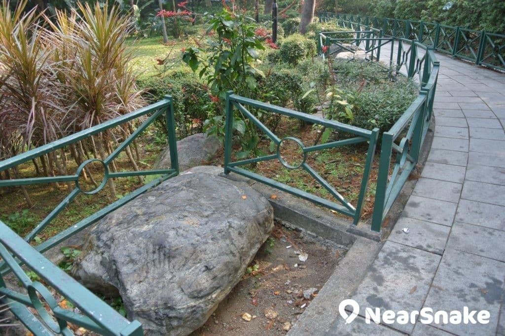 遮打花園內的路徑兩旁擺放了不少自然的石椅子,歡迎大家隨便坐坐。
