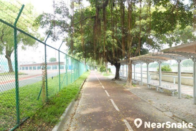 圍欄後面便是城門河畔的香港體育學院。