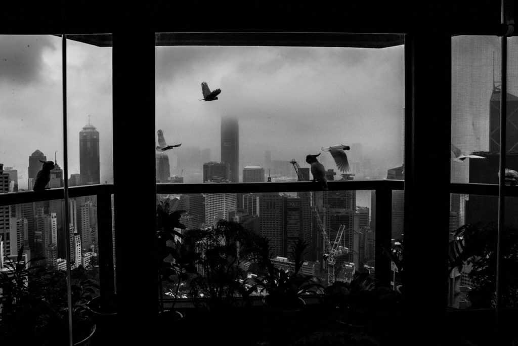 香港藝術中心:《活著如風》Xyza Cruz Bacani攝影展 這是Xyza媽媽工作將近廿年的地方。陽台外,野鳥飛過,偶作停留。