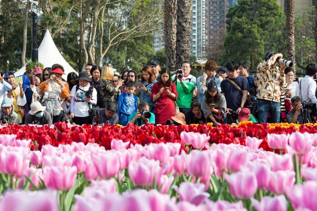 香港花展2019:大紅花為主題花