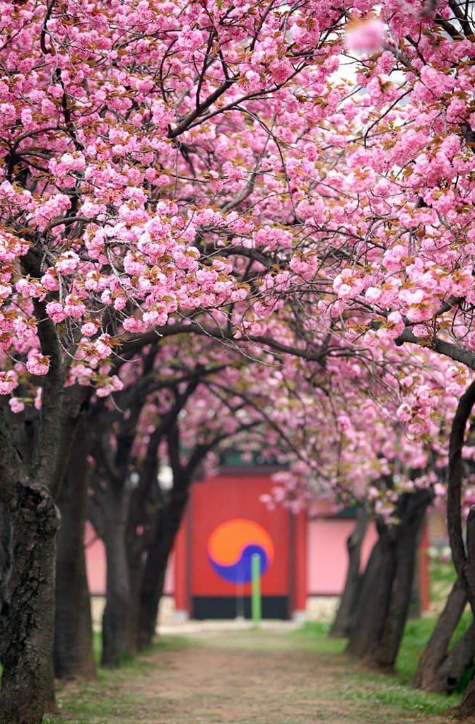 屯門市廣場:「旅遊嘉年華」2019 旅遊嘉年華會送出來往首爾/台北等地的經濟客位機票。