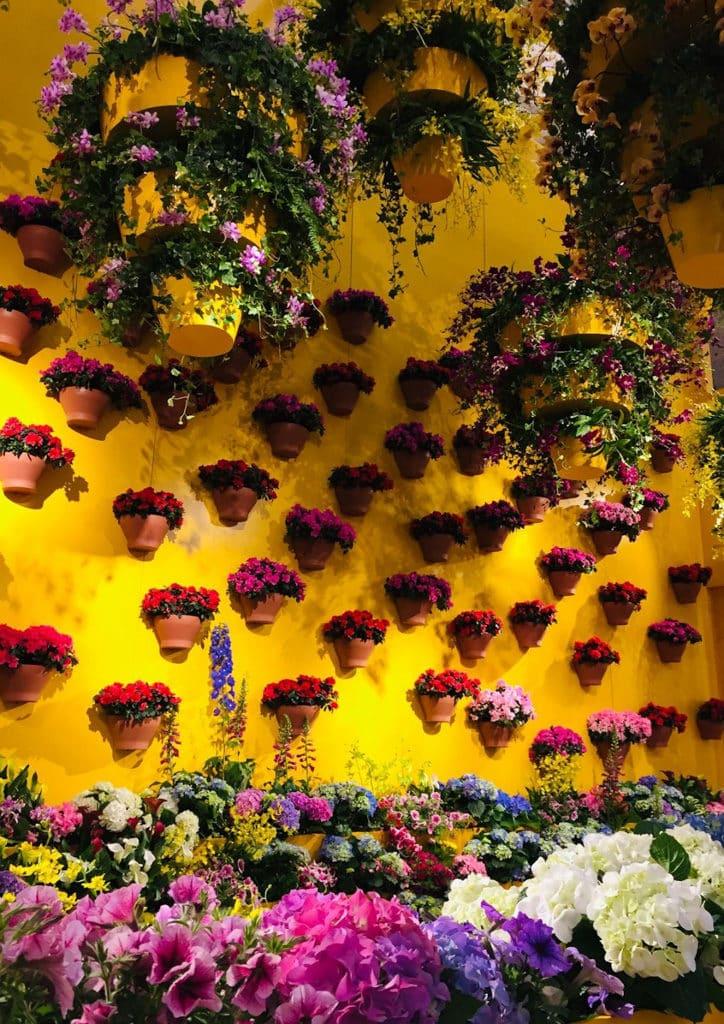 時代廣場:迎春簪花展覽黃色小屋的內外遍佈不同顏色的花卉,呈現多道春日粉色花牆,讓大家可以一邊賞花、一邊拍照打卡!