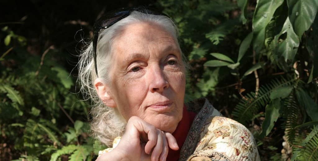 科學館:珍古德的叢林啟迪展覽 展覽將首次全面展示珍古德博士的早期科學發現。