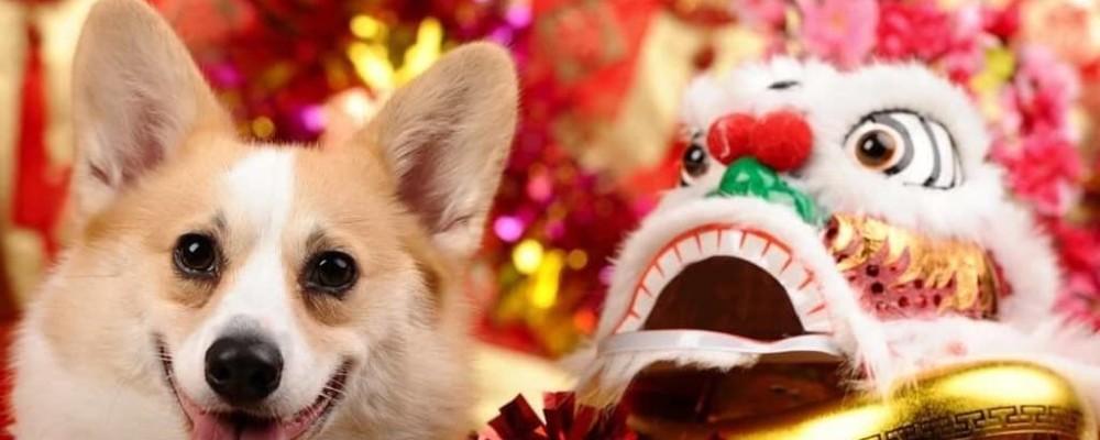 【狗年主題商場】2018農曆新年商場佈置逐一數 狗狗裝飾成新年打卡位
