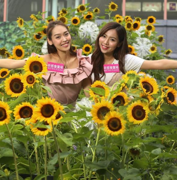 新都會廣場:色彩夏日花祭