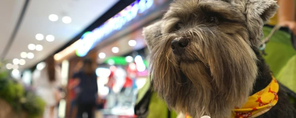 【狗可入商場名單】13 個狗狗商場盤點 Mikiki•圓方•赤柱廣場最寵物友善