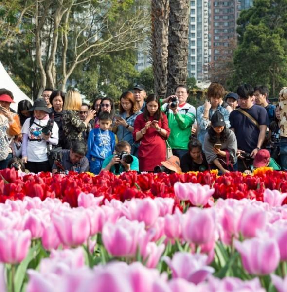 維園:香港花卉展覽2019